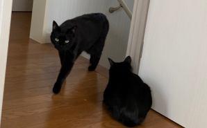 先輩猫に遠慮のかけらもない子猫