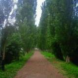 『ポプラ並木』の画像