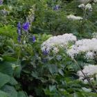 『白山の花たち Aug.16, 2015』の画像