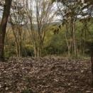 今日は定休日で森作業