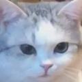 猫カフェに行ったら1匹のネコがこっちをじっと見ていた。…な、何か用ですか? → こうなる…