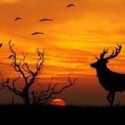 『心の風景。 敬老の日。』の画像