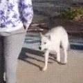 2匹の野良犬が近づいてきた。どうしたの? 助けてくださーい! → こういうことでした…