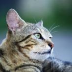 【朗報】 埋葬された猫、葬式後に家の中で生きて発見される