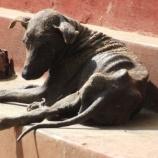 『5000頭もの犬たちを救ったカップル スリランカ編1』の画像