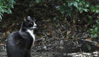 ネッコハンターが猟果を貼るスレ