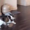 【ネコ】 飼い主が部屋の中を移動する。待ってぇ~♪ → 猫はいつもこうなる…
