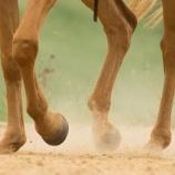 『権力とお金:馬脚を露す』の画像