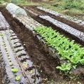 収穫と作付け
