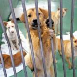 『成犬を引き取りやすく  県動物指導センターきょうからPR(茨城)』の画像