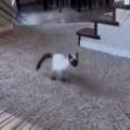 ネコは「散歩」の時間になった。待ってましたぁ~! ボフンッ♪ → ベビーカーにこうなります…