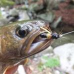渓流釣りと食べ歩き桐生岩魚のブログ