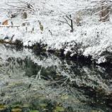『2月に雪化粧した【モネの池】(岐阜県関市板取)。写真多めにしてみました。』の画像