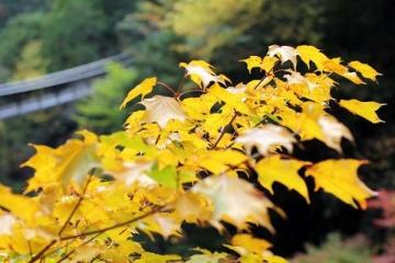 小さい秋みつけた
