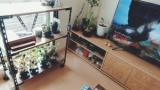 【朗報】部屋に植物置いたったwww(※画像あり)