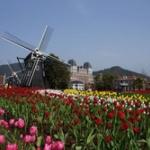 今月長崎に1人で観光行くんだけどおすすめある?
