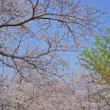 『【写真】 鬼子母神 桜  RX1』の画像