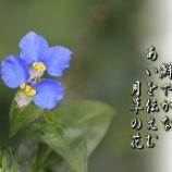 『月草の花』の画像