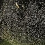 『満天の星のような蜘蛛の巣』の画像