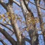 『春 爛漫』の画像