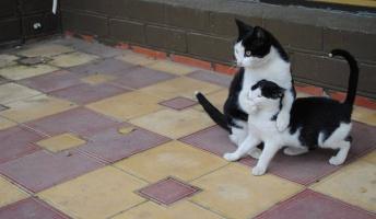 思わず吹いたスレ・画像・AA・HP・FLASH等『99人中98人が見間違える画像』『猫のツッコミ』