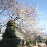 『戸田市の桜 そろそろ満開に』の画像