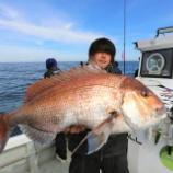 『10月18日 釣果 スーパーライトジギング マダイ最大79 トラフグ 6キロ』の画像
