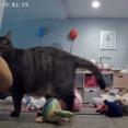 毎晩ベッドルームのドアの前に貢物を持ってくる猫。それがどんどんエスカレートして...