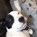 2匹の犬がソファに座っていた。いったい何が始まるんです? → ファッ!?