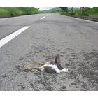 『野生動物の交通事故』の画像