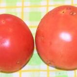 『国東の食環境(345)高冷地トマト』の画像
