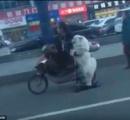 【画像】中国の犬の散歩が斬新過ぎると話題に