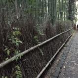 『竹林の小径、、、の下のフサフサ』の画像