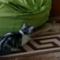 ネコが物陰に隠れていた。女の子が部屋に入ってくる → 楽しい遊びがはじまった…