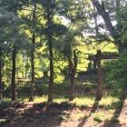 『早朝に森林浴に行きました。奥須磨公園!』の画像
