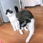 ねころぐ(Cats  blog)
