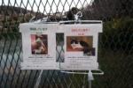 保護していますとさがしていますのポスターが掲示されてる〜松寶寺近くの池のところ〜