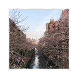 『もう桜は咲き始めてるのですね』の画像