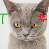 『チコちゃんでなくても叱りたくなるPART3:集団免疫』の画像