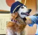 異常知らせようと懸命にほえ、ケージに何度も体ぶつける…お手柄犬に感謝状、人間でいうと80代後半 侵入者知らせ逮捕 [画像]