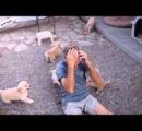 イエローのラブラドール・レトリバー、誕生した子犬13匹は全てブラックに
