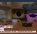 ノルウェー公共放送。コロナのニュース流すのやめて子猫を延々と放送始まる