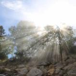 『朝の木漏れ日』の画像