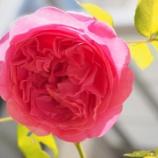 『いつか綺麗な花が咲く』の画像