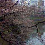 『千鳥が淵の桜は二分咲』の画像
