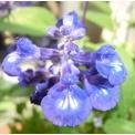花 ベランダの花とコスモス、小菊