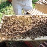『人の家 ミツバチの家』の画像