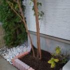 『休日の庭仕事』の画像