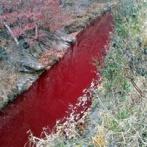 【韓国】 豚コレラ、大量殺処分の血で川が赤く染まる