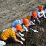 『芋掘り遠足のバトン』の画像